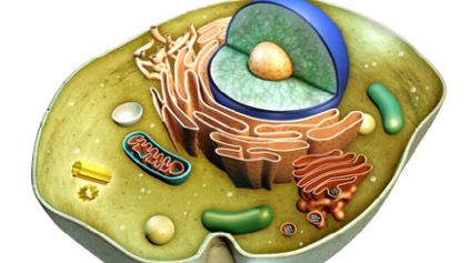 Cellsymbiosis