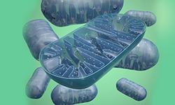 Mitochondrientherapie