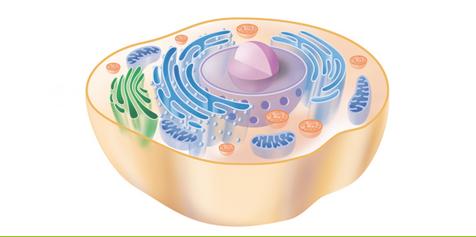 Was ist Cellsymbiosistherapie?