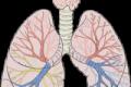 Webinare Anatomie & Pathologie der Atmungsorgane