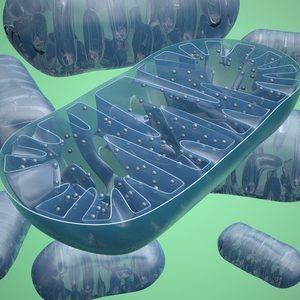 Mitochondriopathie-nitrosativer-Stress-NO