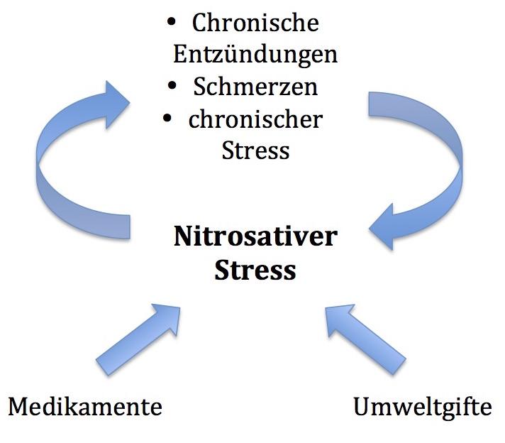 nitrosativer Stress, Mitochondriopathie, Heilpraktiker Berlin Schöneberg
