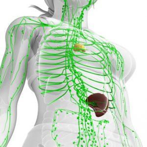 Lymphsystem-Lymphe-Lymphfluss-Entgiftung-Immunsystem-Detox