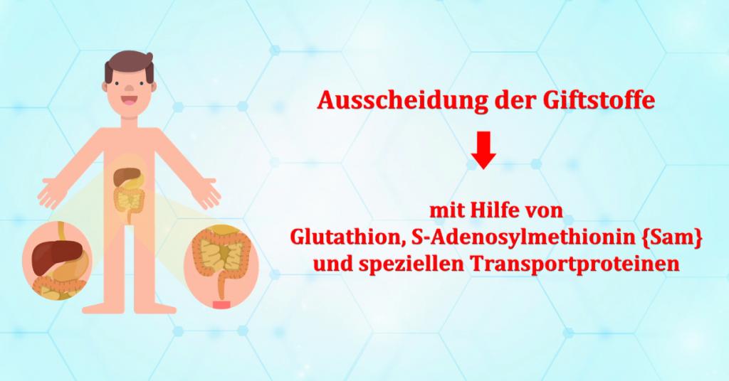 Phase-3-Entgiftung-Glutathion-SAM-Ausscheidung-Gifte-Schwermetalle-Heilpraktiker-Berlin-RC-Naturheilpraxis