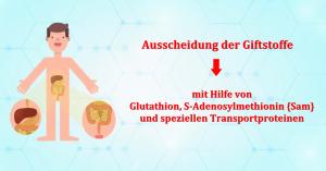 Phase-3-Entgiftung-Glutathion-SAM-Ausscheidung-Gifte-Schwermetalle-RC-Naturheilpraxis