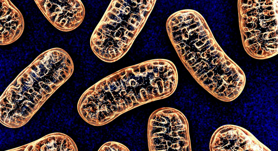 Mitochondrien aktivieren mit Mikrostrom