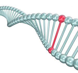 Gen-SNP- Polymorphismus
