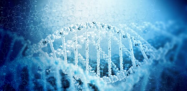 COMT, MTHFR, GST – Gen-SNP´s in Stärken verwandeln
